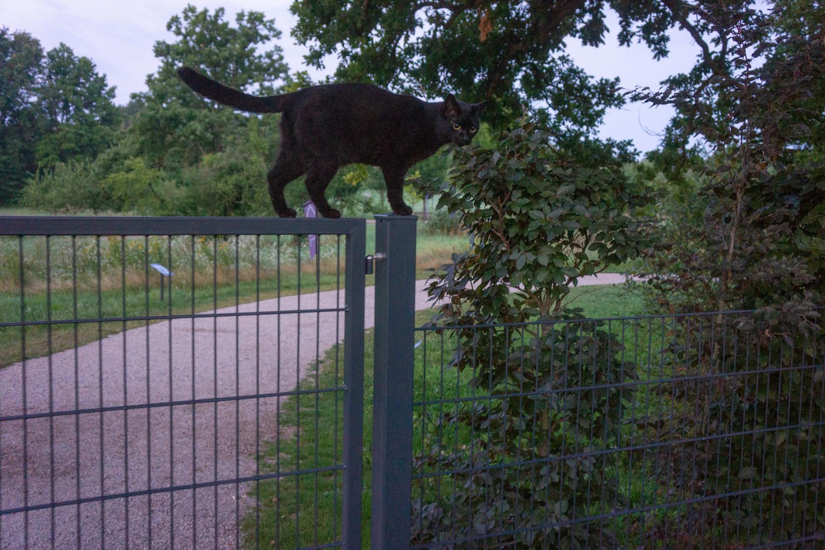 Die schwarze Katze am Spanischen Turm